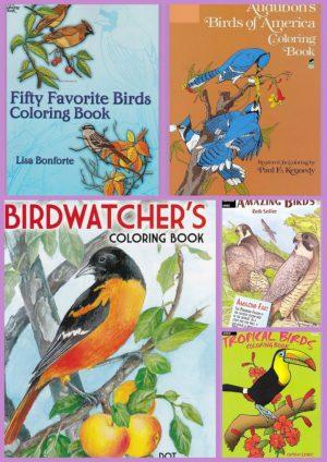 Kleurboeken volwassenen Texel kleurboekenwinkel kleurboeken vogels